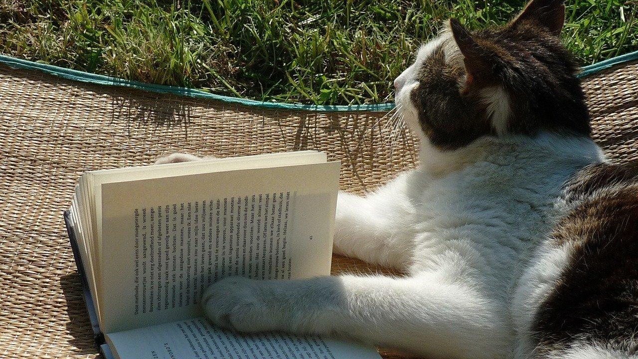KittysBook.Com Cat Studying